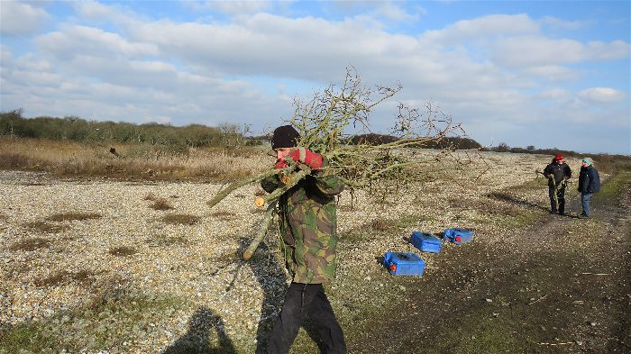 volunteer carrying branches