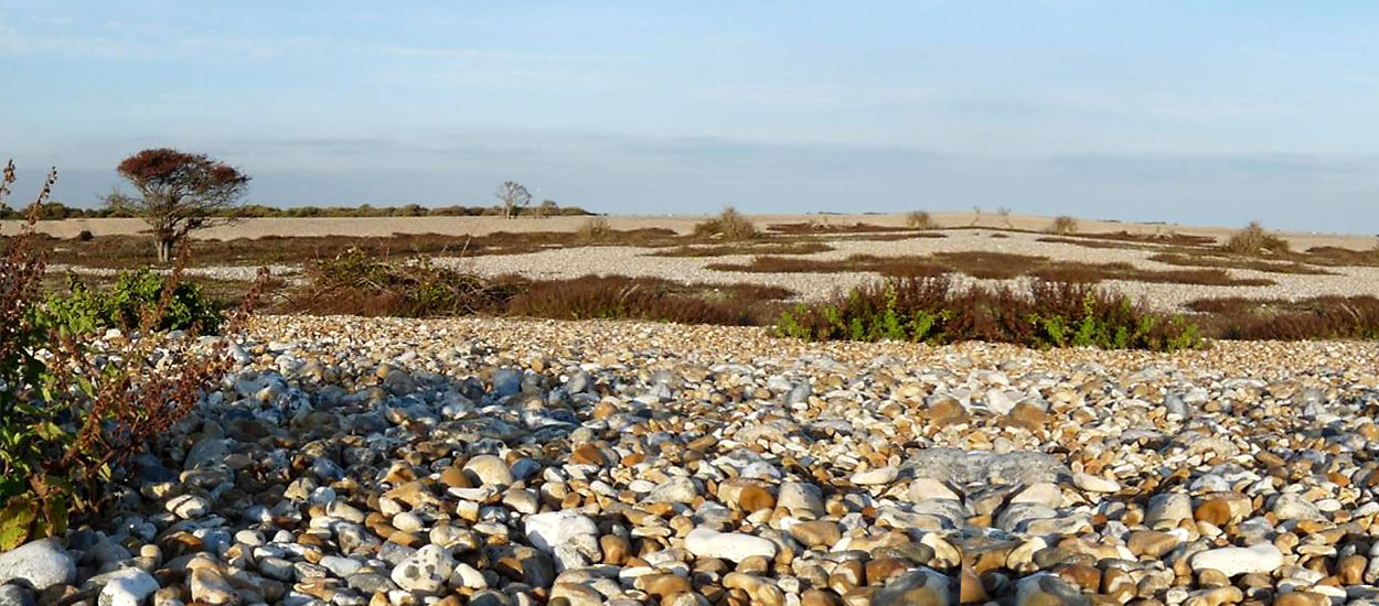 shingle-information-romney-marsh